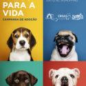 Município de Santarém e ASPA promovem adoção de animais