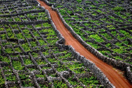 vinha-pico-patrimonio-UNESCO